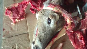 Dead deer butchered