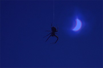 Spider in Moonlight shot with Nikon D3200