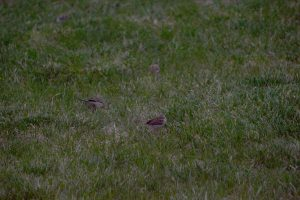 Group of cute finches
